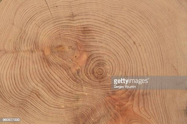 wooden cross section - wood material stock pictures, royalty-free photos & images