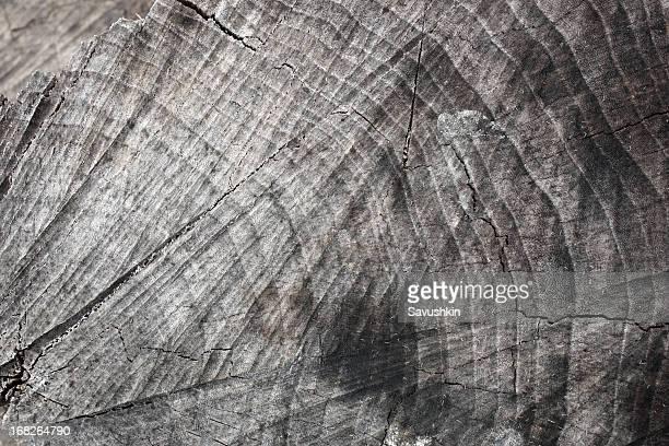 Corte madera