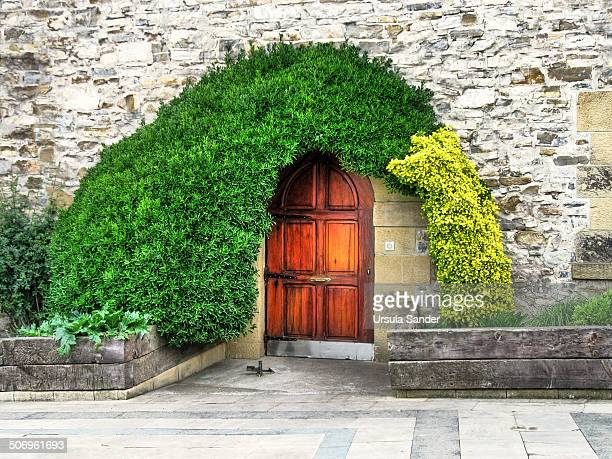 Wooden door and entrance of an old historic house framed with dark and light green plants.