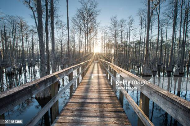 wooden footbridge over swamp amidst trees at pine log state forest during sunset - pine log state forest stock photos and pictures