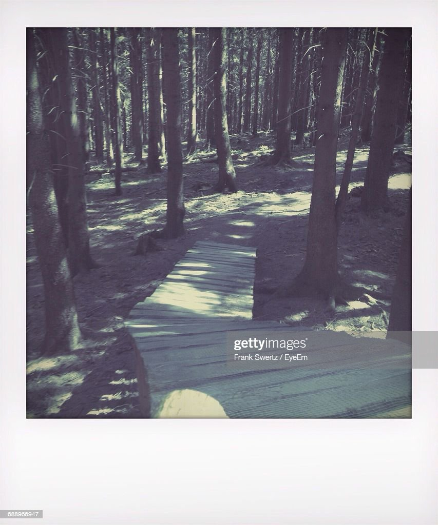 Wooden Footpath In Forest : Stock-Foto