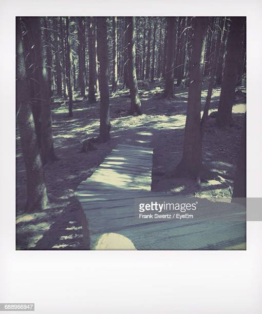 wooden footpath in forest - frank swertz stockfoto's en -beelden