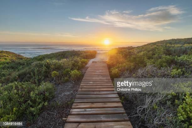 wooden footpath through fynbos - província do cabo ocidental imagens e fotografias de stock