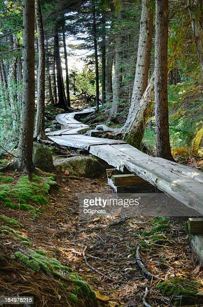 Wooden footpath through the woods