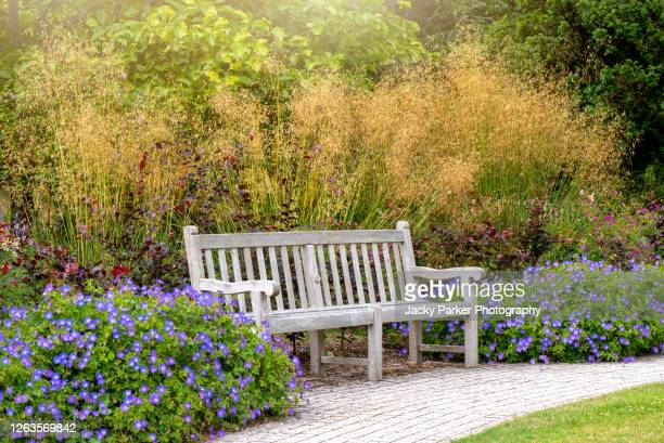 wooden garden bench with purple cranesbill flowers and stipa ornamental grasses - park bench stock pictures, royalty-free photos & images