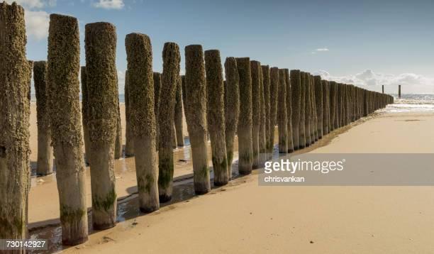 Wooden groynes on the beach, Koudekerke, Zeeland, Holland