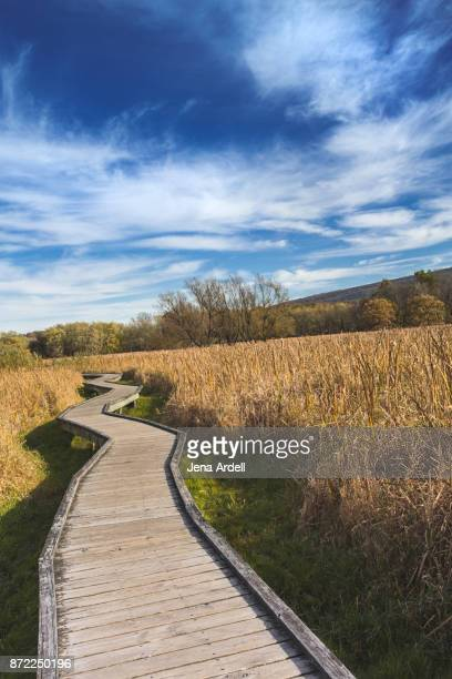 Wooden Hiking Path Along Appalachian Trail