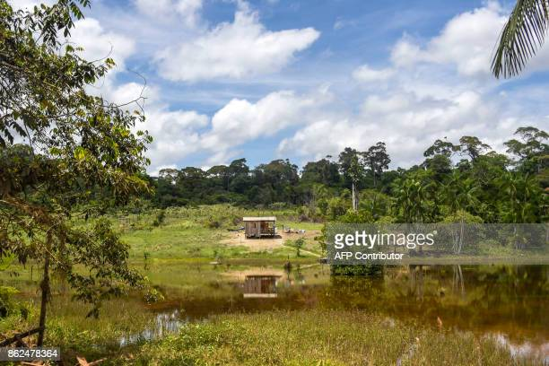 Wooden house is seen from the BR-210 highway in the town of Cupixi in Amapa state in Brazil's Amazon region on October 15, 2017. / AFP PHOTO / Apu...