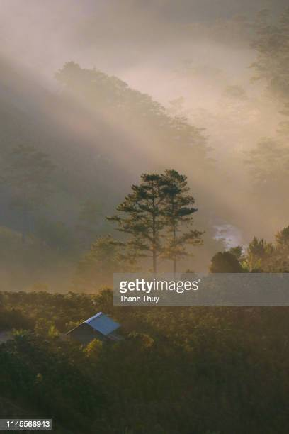 Wooden house on the hill on misty day