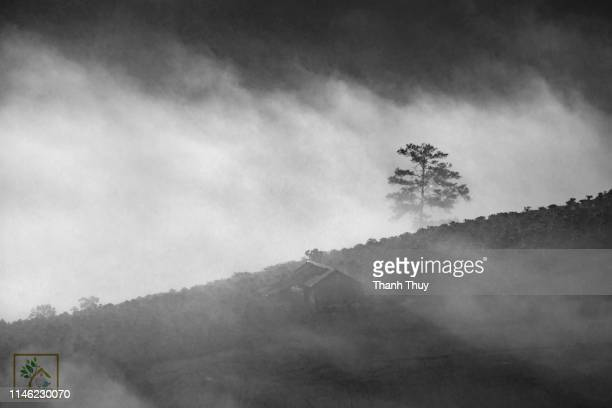 Wooden house on the misty hill