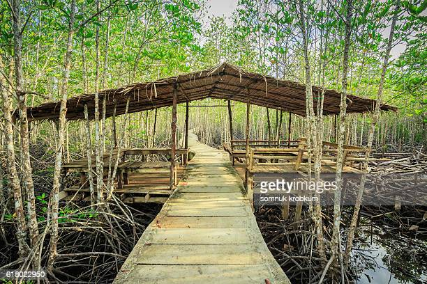 Wooden hut and walkway in mangrove forest
