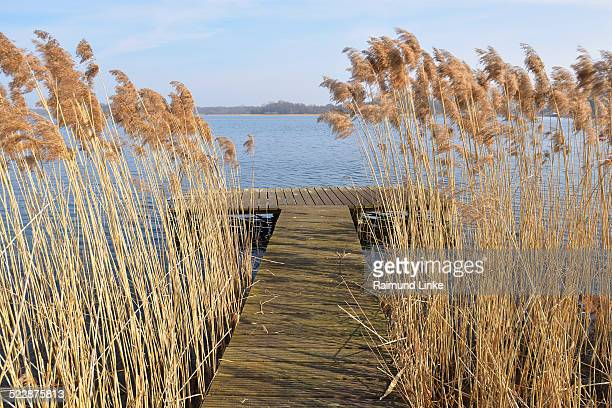 Wooden Jetty between Reed
