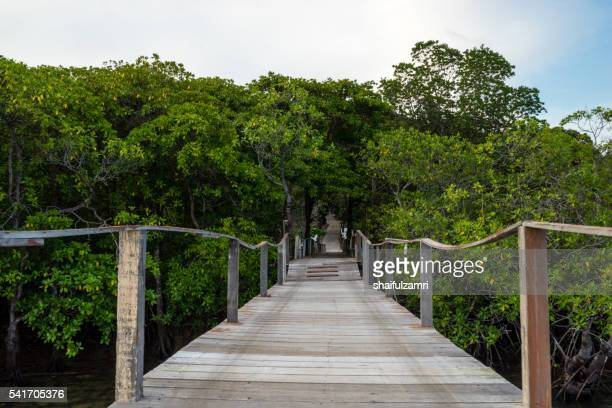 wooden jetty in sibu island of johor, malaysia - shaifulzamri 個照片及圖片檔