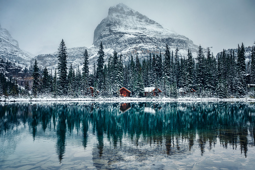 Wooden lodge in pine forest with heavy snow reflection on Lake O'hara at Yoho national park 1191630254