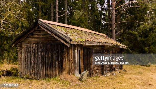 wooden log cabin amidst trees and plants in forest - ログハウス ストックフォトと画像