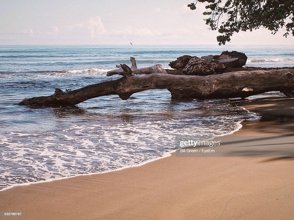 Wooden Log On Beach Against Sky On Sunny Day : Foto stock