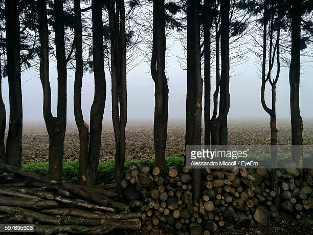 wooden logs amidst trees in forest - alessandro miccoli stockfoto's en -beelden