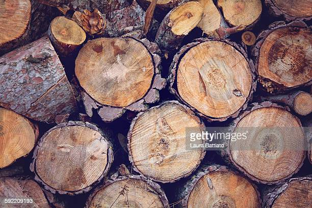 Wooden logs stacked