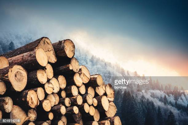 Wooden Logs With Pine Forest In The Background