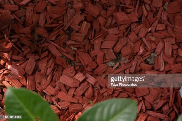 wooden mulch - hausgarten stockfoto's en -beelden