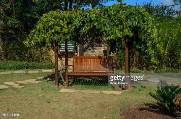 Wooden ornamental bench outside and grapevine horizontal