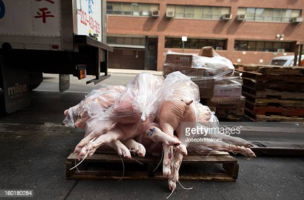 CONTENT] A wooden pallet of pig carcasses rests next to a delivery truck in Chinatown New York City waiting to be loaded into a nearby restaurant...