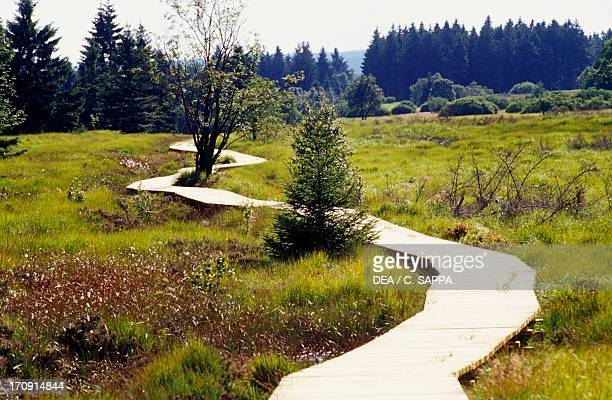 Wooden path through grass High Fens Natural Reserve Ardennes Belgium