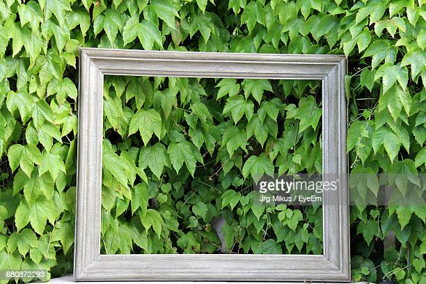 Wooden Picture Frame In Front Of Green Leaves