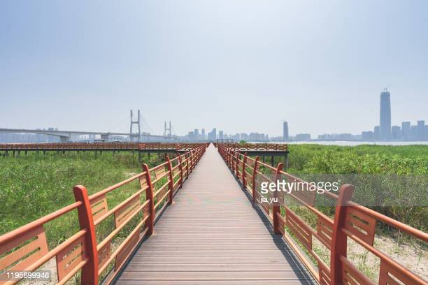 wooden plank road of wetland park along the yangtze river. - wuhan stock pictures, royalty-free photos & images