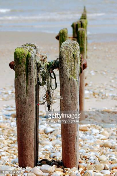 wooden posts at beach - barry wood stock pictures, royalty-free photos & images