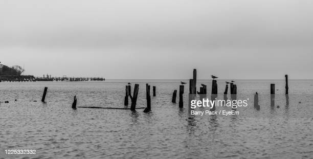 wooden posts in sea against sky - barry wood stock pictures, royalty-free photos & images