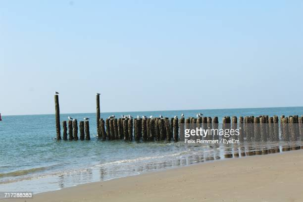 Wooden Posts On Beach Against Clear Sky