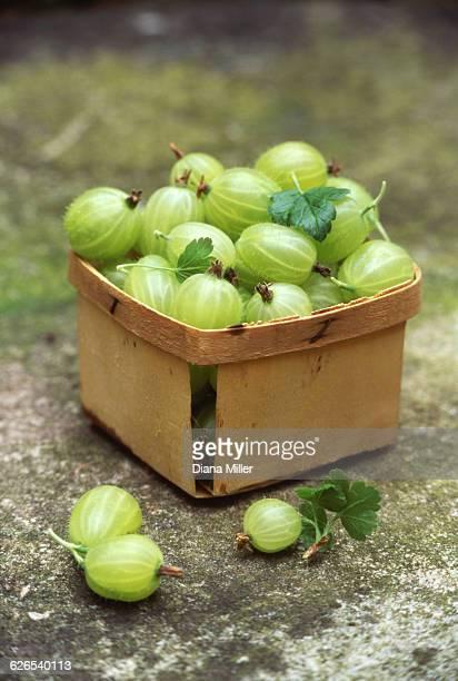 Wooden punnet of freshly picked gooseberries outdoors