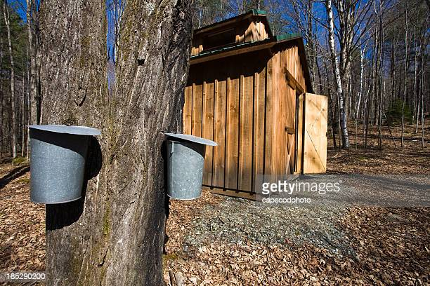 wooden shed in the woods next to large tree with metal bins - hut stock pictures, royalty-free photos & images