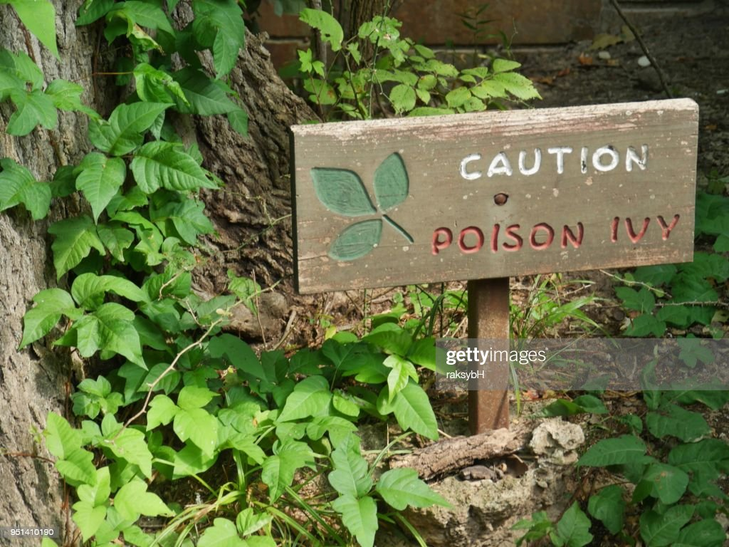 Wooden sign warning of poison ivy in a wooded area, : Stock Photo