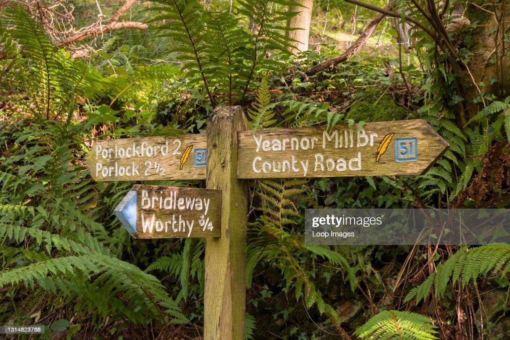 A wooden signpost in Worthy Wood near Porlock Weir in Exmoor National Park : News Photo
