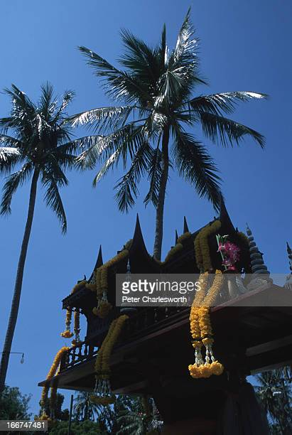 A wooden Spirit House with flower garland offerings is dwarfed by tall coconut palm trees near the main road along Patong beach one of the most...