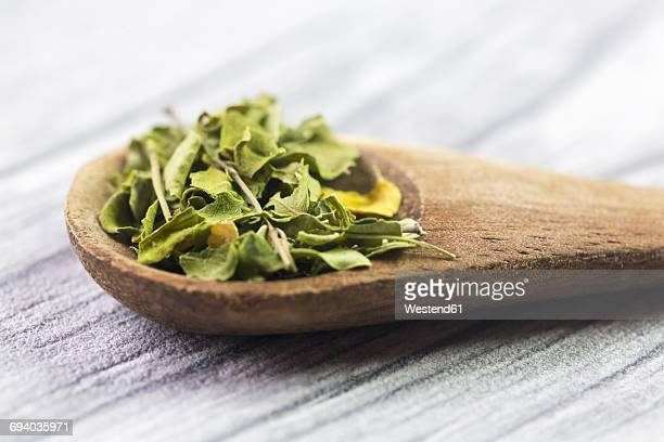 wooden spoon of moringa - moringa tree stock photos and pictures