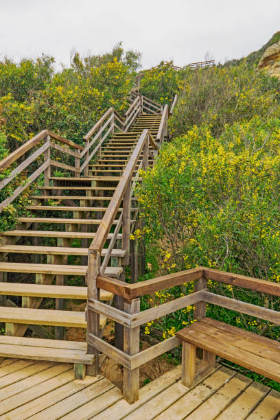 Wooden Stair Structure Against Sky In Nature