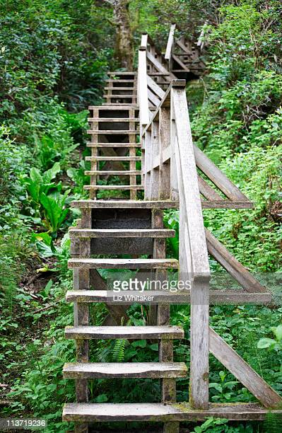 Wooden staircase ascending through forest
