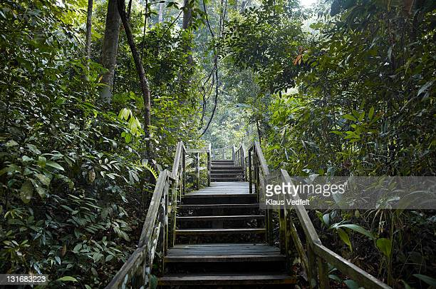 wooden staircase in jungle scenery - nature reserve stock pictures, royalty-free photos & images
