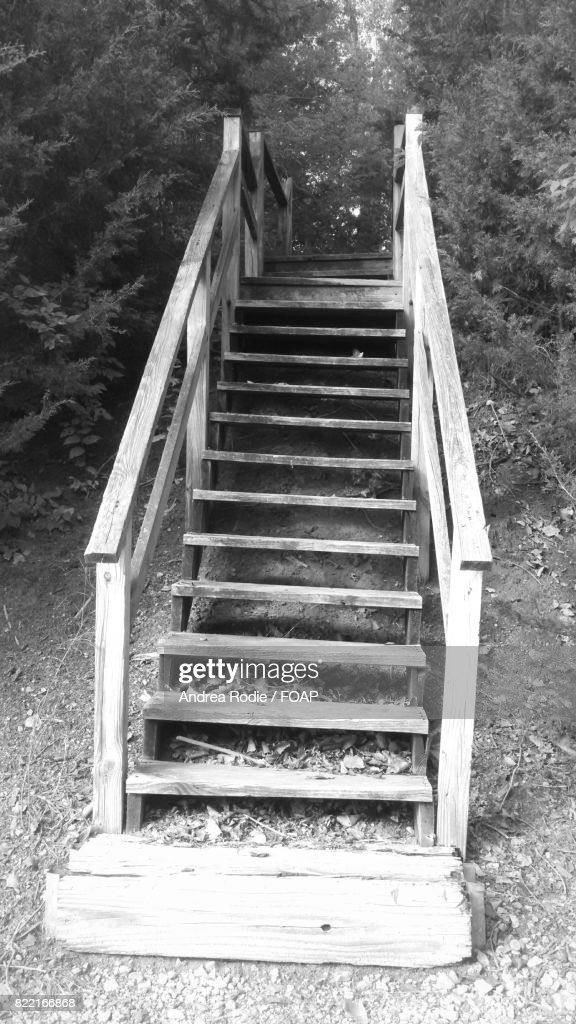 Wooden staircase in woods : Stock Photo