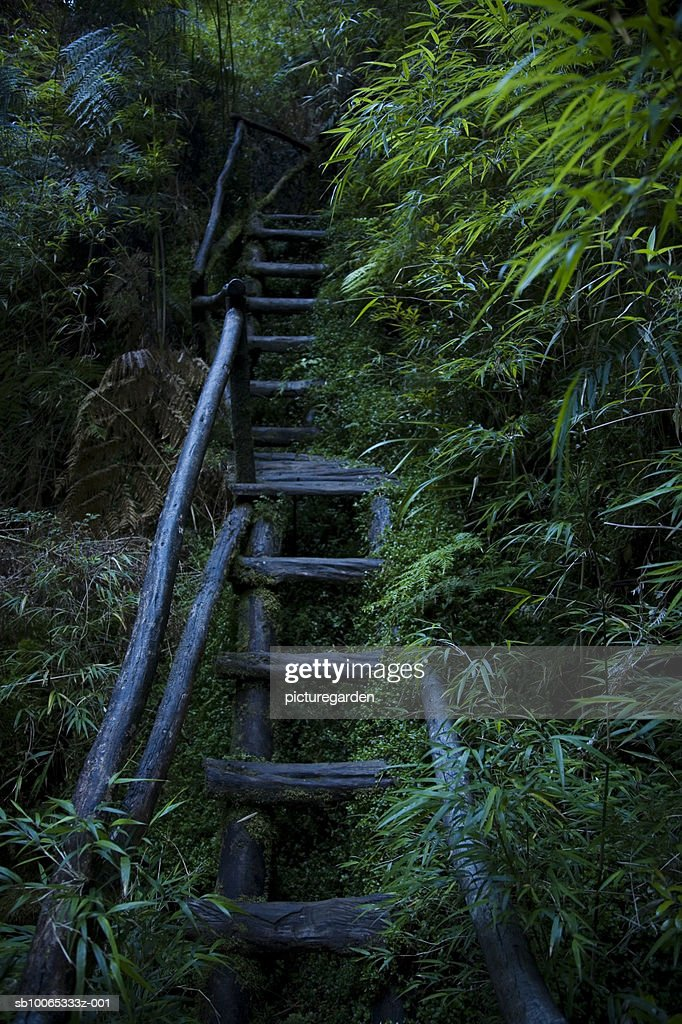 Wooden steps in forest : Foto stock