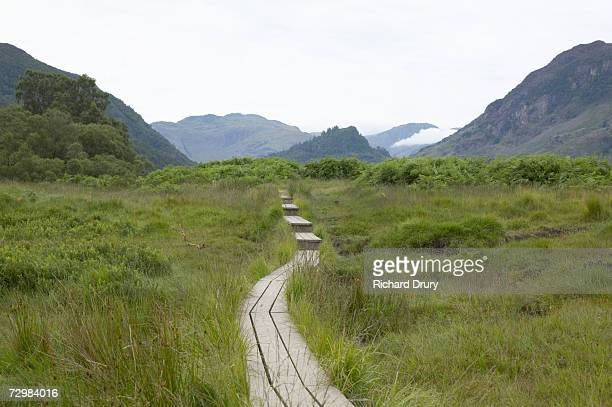 wooden steps through marsh - richard drury stock pictures, royalty-free photos & images