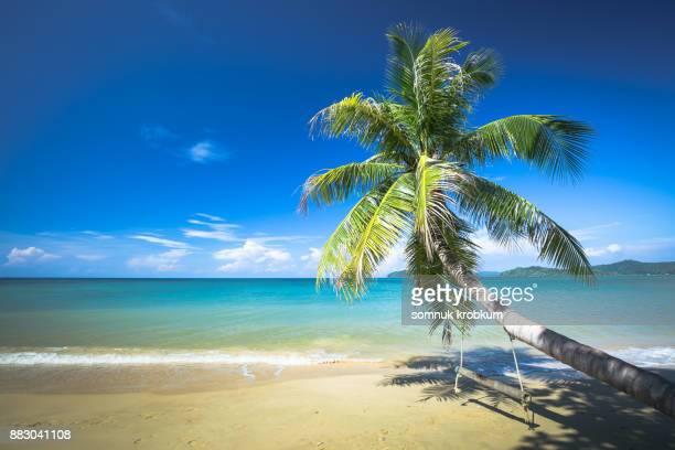Wooden swing on palm tree on sea beach
