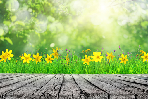 wooden table and spring grass and tree leaves background 1128869749