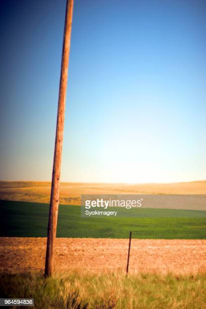 Wooden telephone pole among agricultural landscape