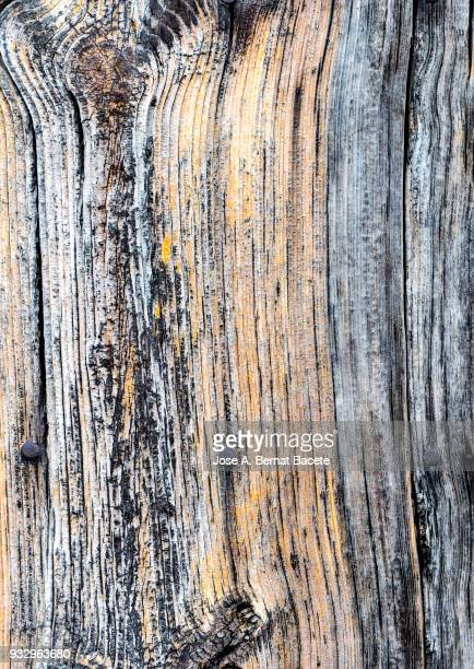 Wooden texture detail ancient outdoors, full frame. High resolution photography.