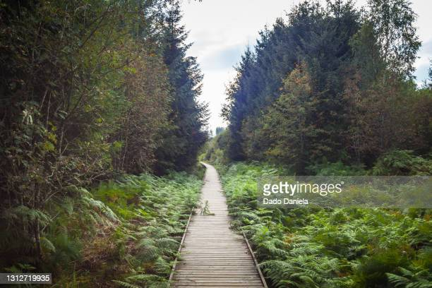 wooden trail - capital region stock pictures, royalty-free photos & images