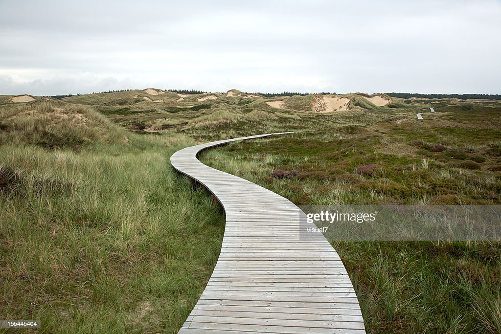 wooden walking path : Stock Photo